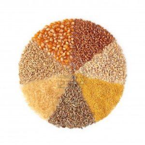 10107187-cereali--mais-frumento-orzo-miglio-segale-riso-e-avena