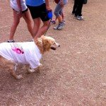 Race for the cure 2013: cane con pettorina