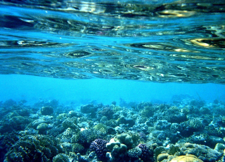 Sharm e' Charme