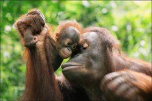 festa della mamma bioparco roma orango