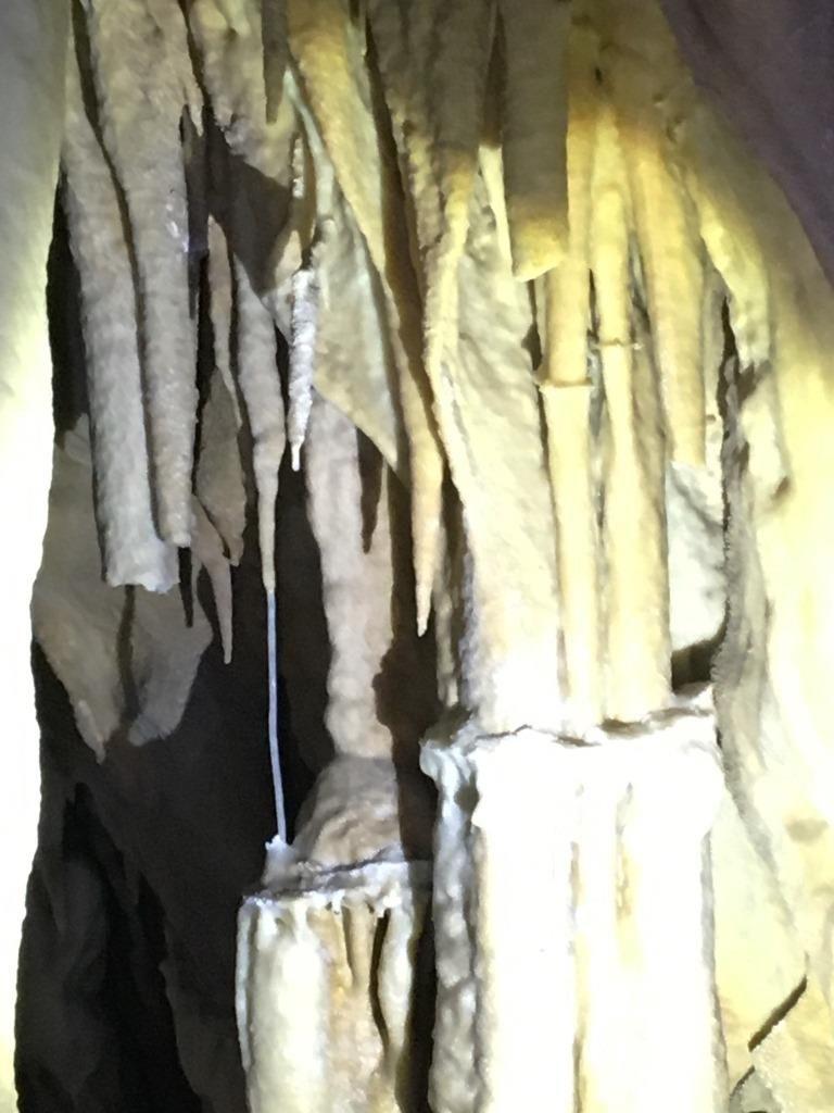 Grotte di Pietrasecca Cervo colonna giovane