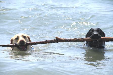 baubeach 20 anni cani spiaggia bastone