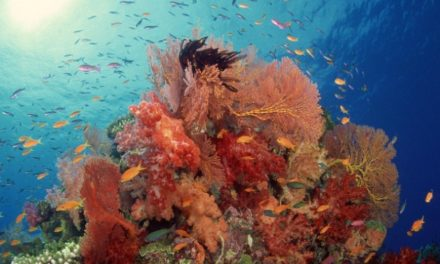 Il colore dell'anno 2019 secondo Pantone? Living Coral
