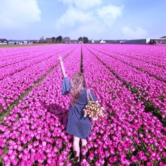 Tulipark roma campo tulipani rosa