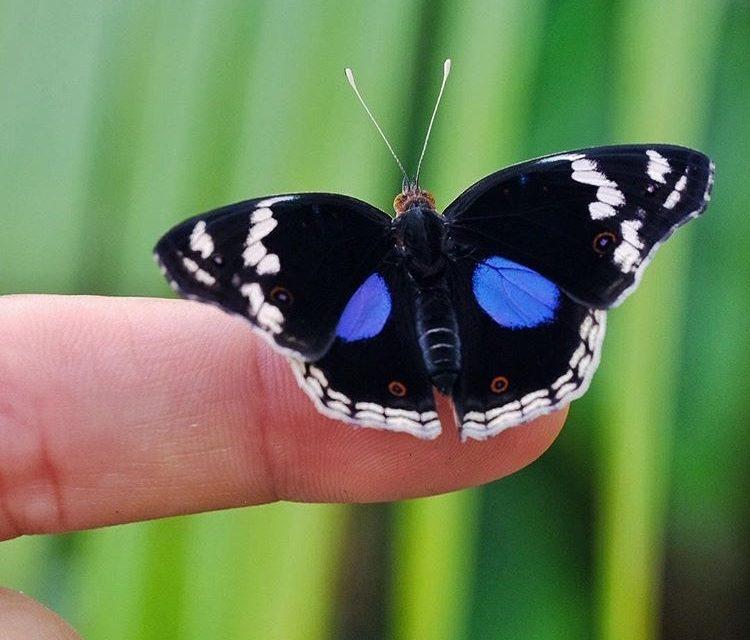 La Casa delle Farfalle a Roma fino al 9 giugno