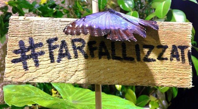 casa delle farfalle roma 2019 farfallizzati