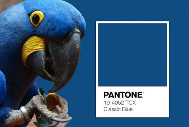 classic blue pantone 2020 pappagallo